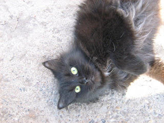Yellow-Eyed Black Fat Cat