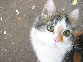 Eyed Tortoiseshell Kitty