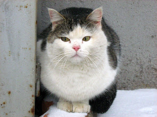 Multi-Coloured Frozen Fat Kitty