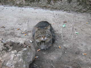 Old Multi-Coloured Street Cat