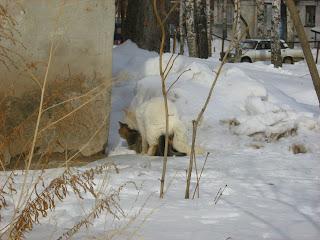 Playing White Cat and Tortoiseshell Kitty
