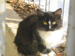 Street Cats Family: Long-Haired Brother