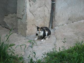 Street Cats Potpourri