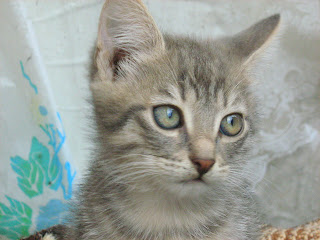 """Young Smoky Kitten in """"Catofamily: Part One"""""""