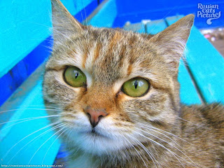 Green-Eyed Brown Mackerel Torbie Homeless Kitty