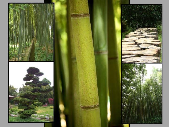 Un nouveau regard le bambou habille votre int rieur en for Bambou interieur entretien