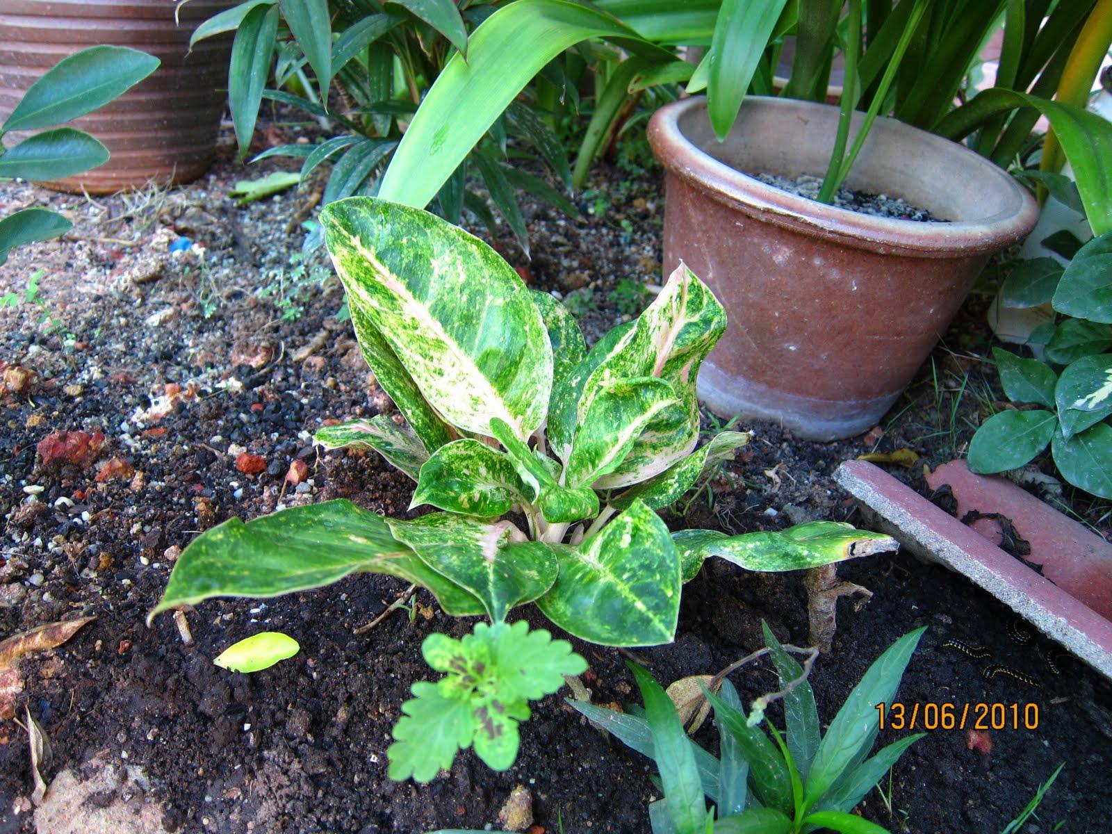 Indoor flowering plants no sunlight - Plants that need no sunlight ...