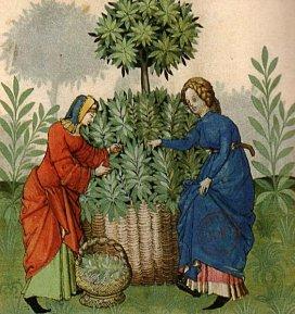 http://3.bp.blogspot.com/_R80s2s44Ous/TQ8JmZMRpaI/AAAAAAAAAlw/6ypuANL423Q/s1600/cueillette-plante-medicinale-moyen-age.jpg