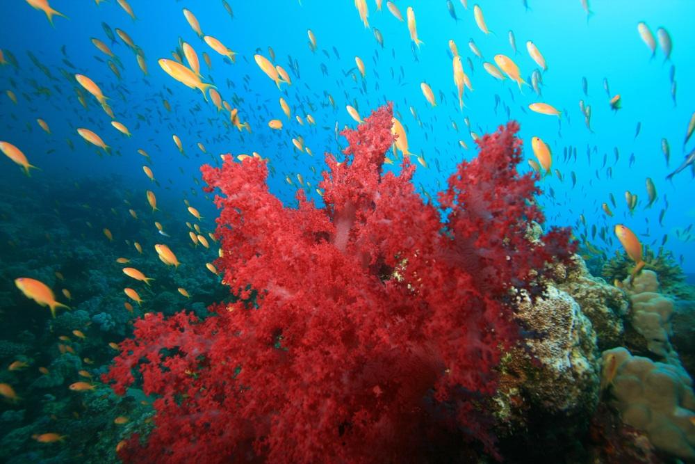 Amici della natura giugno 2010 for Immagini coralli marini