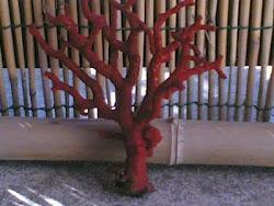 Ramo di corallo rosso di Su Pallosu