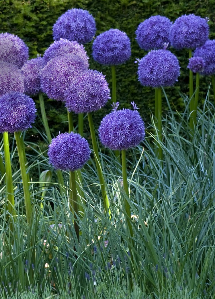 [_dsc4118+24+June+09Howick+Hall+Gardens+&+Arboretum.jpg]
