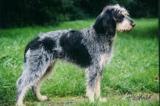 foro para perro de caza: