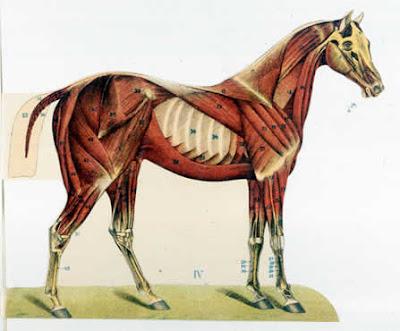 http://3.bp.blogspot.com/_RAJtZxqA6jA/Sh1-CM27NdI/AAAAAAAAFhM/Ga-Uc7megkU/s400/paard+a+1912.jpg