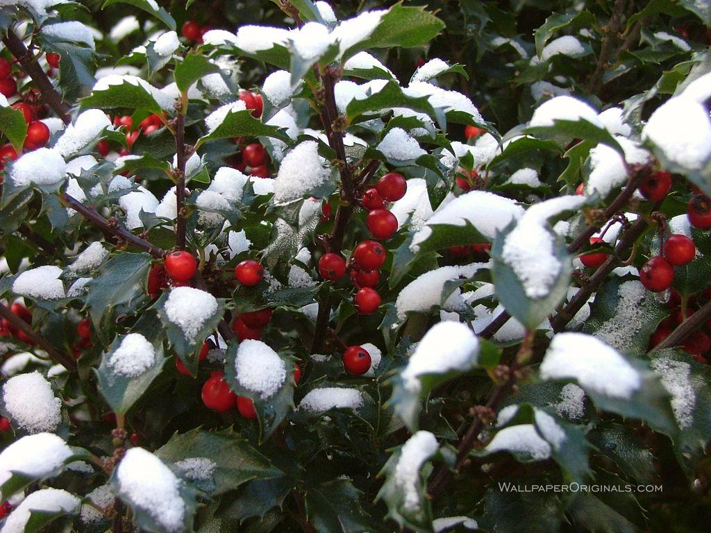 Burl Ives A Holly Jolly Christmas Snow For Johnny