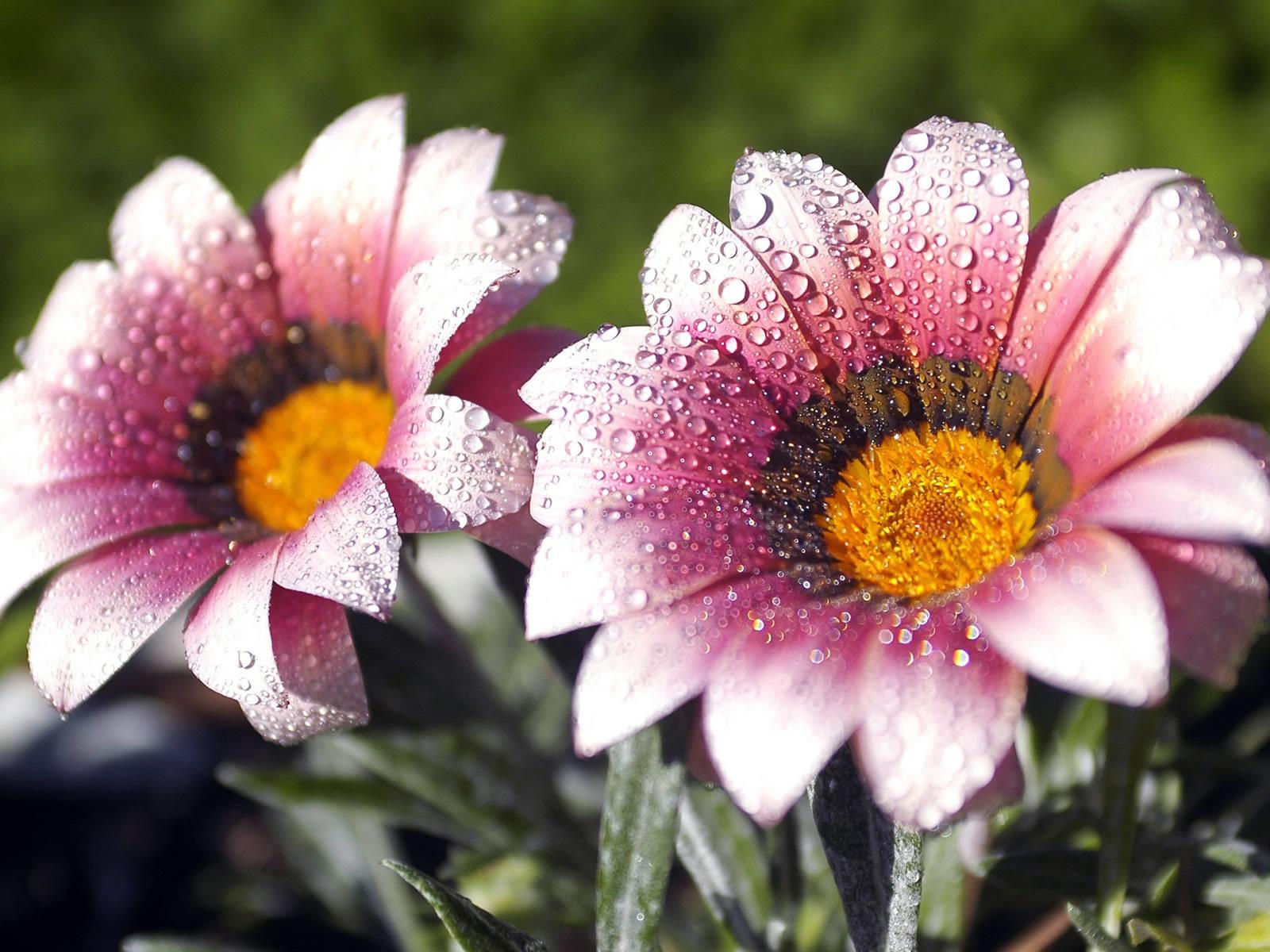 http://3.bp.blogspot.com/_RAlP3BmEW1Q/TQNbbUanN8I/AAAAAAAABAs/c7q1tcemEtk/s1600/Bloemen-achtergronden-bloemen-wallpapers-11.jpg
