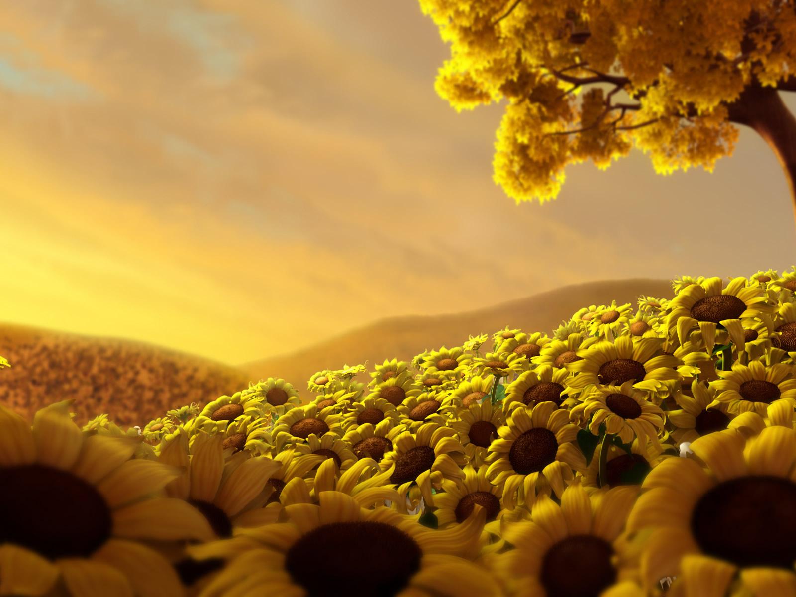 Veld met gele zonnebloemen zomer desktop hd wallpaper zomer wallpaper