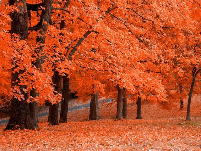 Oranje herfst achtergrond met bomen en bladeren