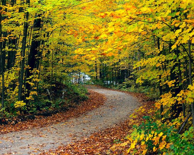 Weg met gele bladeren