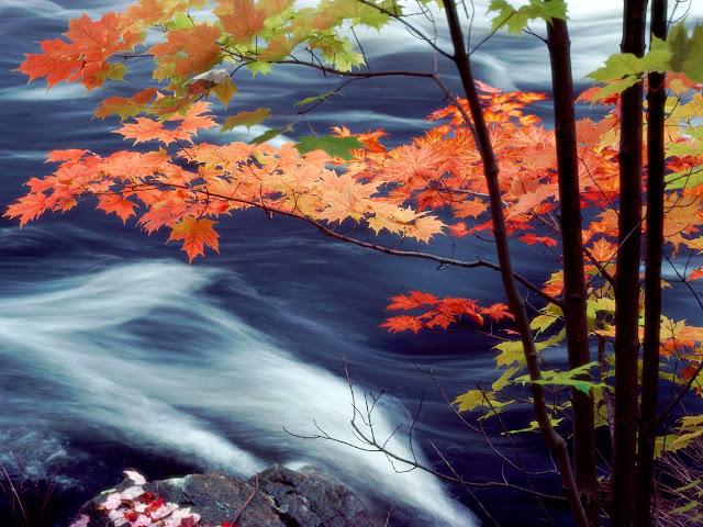 Woest water en oranje rode bomen