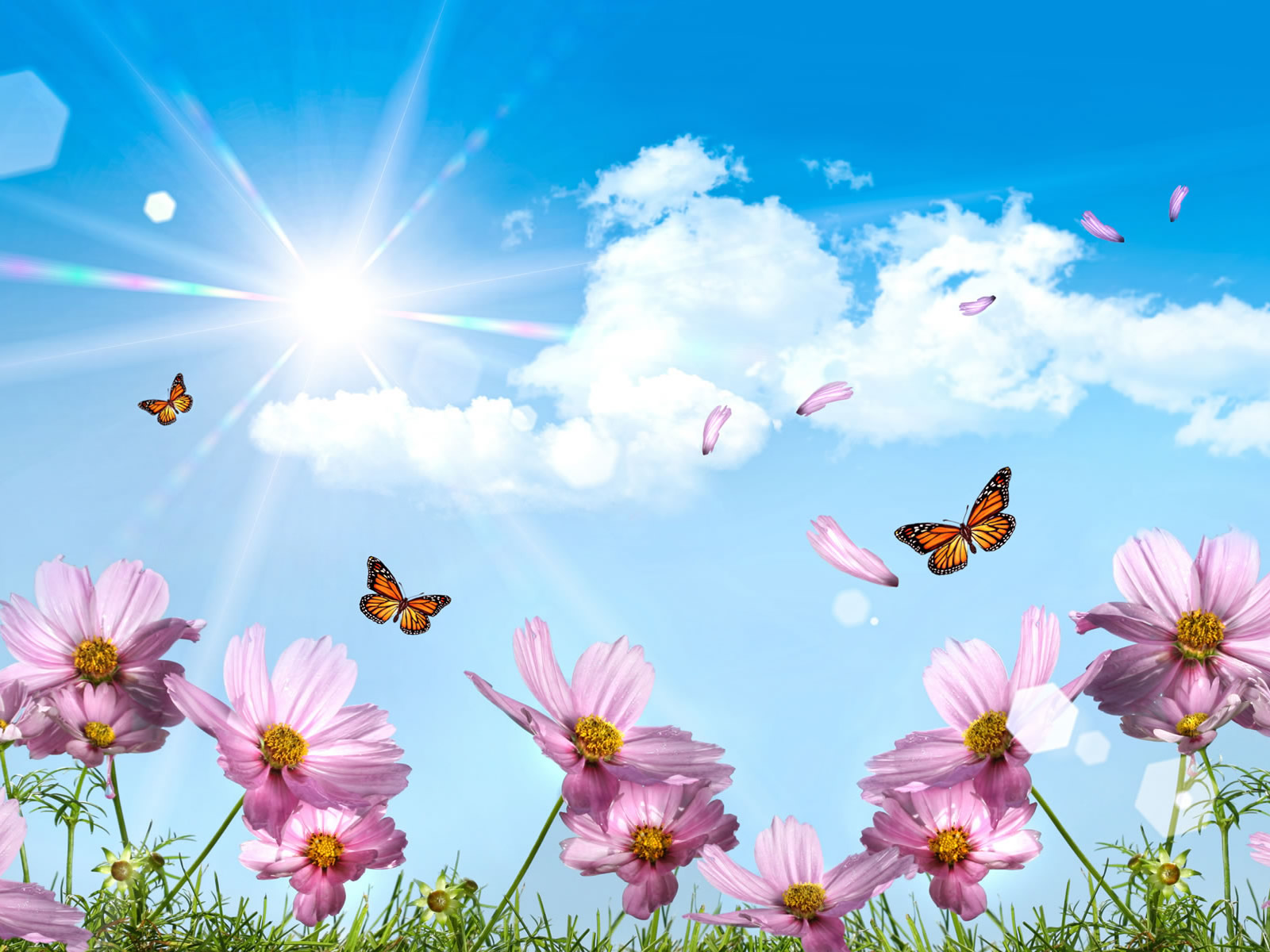 Free Computer Wallpaper Summer Summer butterflies and
