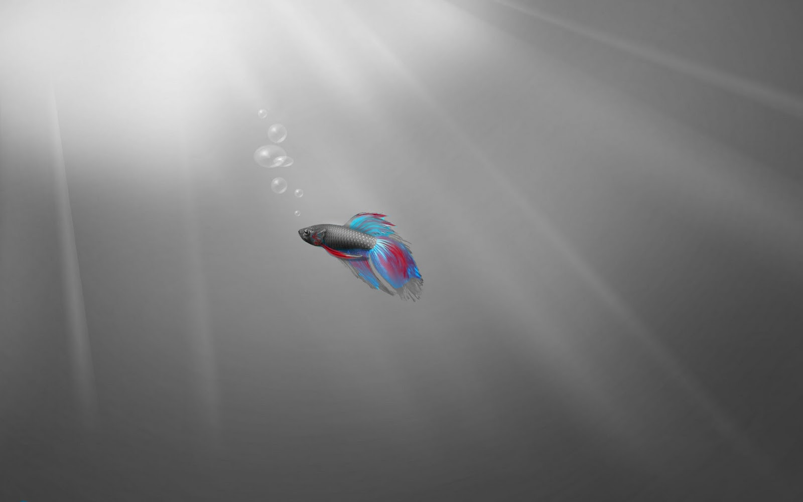 windows 7 wallpapers ~ hd desktop wallpapersgrey windows 7 wallpaper with a guppy fish