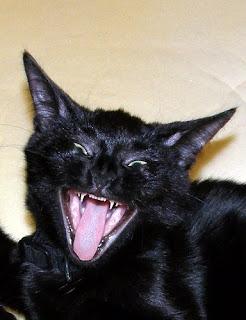 Evil Cat Laugh