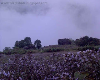 misty mountain valley in munnar kerala with neelakurinji flowers