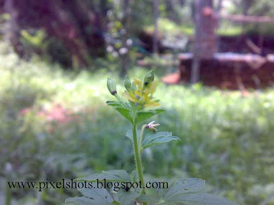 yellow flower in plant photo using nokia n73
