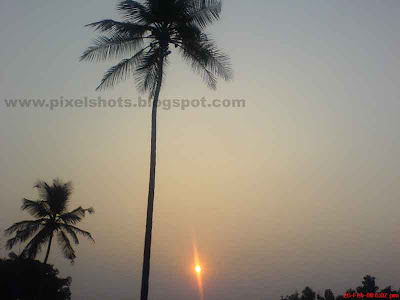 sunset scenery with coconut trees in the foreground and sunset in the horizon