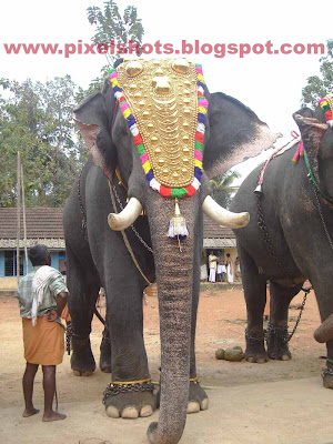 elephant named after hindu god,kerala temple owned elephant e ayyappan,elephant-information,famous-elephant,mighty-tuskers