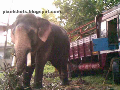 Elephant Ganapathy or Ganesh from Kerala,elephant-photo,elephants,kerala-elephants