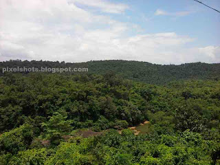 thenmala vegetations and forests photographed from roadside,dense tropical rain forest covering banks of river kallada,photographs taken from near thenmala lookout point