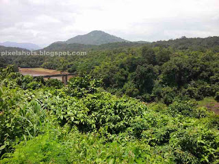tropical forests landscape views,western ghats forests,thenmala forests,vegetation of western ghats photographed from thenmala,road side tropical forests