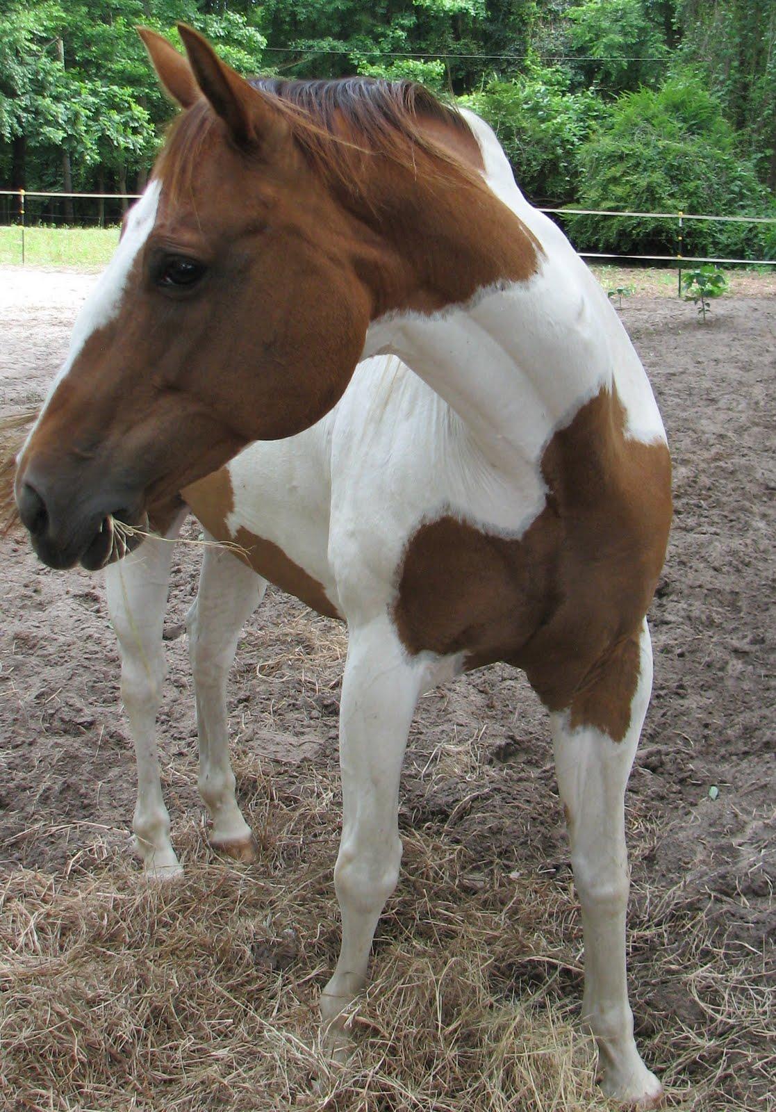 Horse issues. Again.