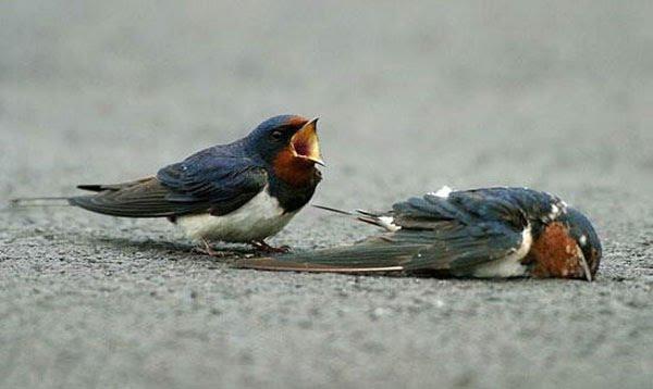 Tuga kad naidje  Ptica+6