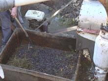 rastrojo o palito de la uva