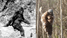 Sasquatch Sighting!