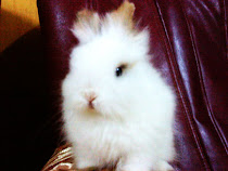 aku suke rabbit