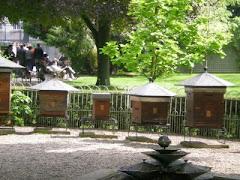 Bee Garden in Luxembourg Gardens