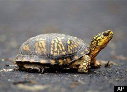 Turtles On The Runway