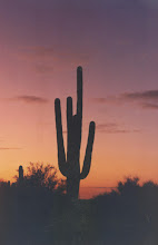 The Beautiful Sonoran Desert