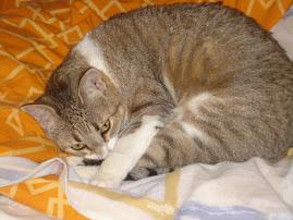 También tenemos una gatita.