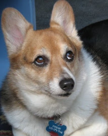 The Corginator &amp; Personal Assistant to the Blogger