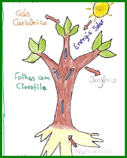 arvores2lucas Dia da Árvore Importância da Fotossíntese para crianças