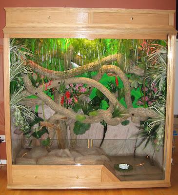 Reptilia mania - Iguana Cage