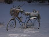 cykel i vinterskrud