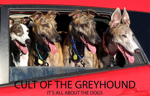 Cult of the Greyhound