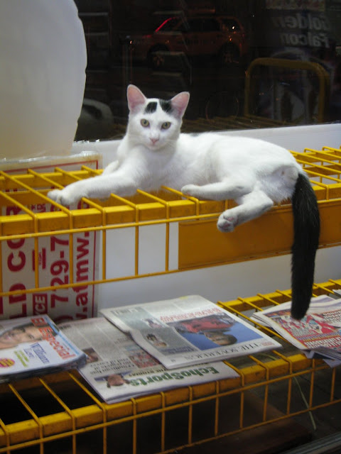 White bodega cat on newspaper rack