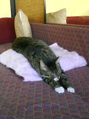 czasem zasypia nagle podczas obowiązkowych ćwiczeń!