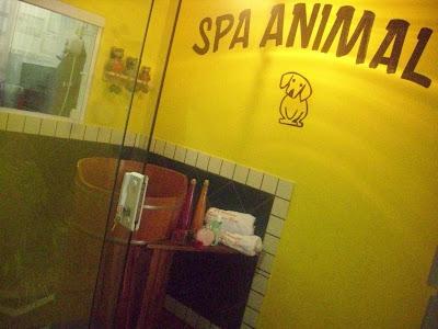Hidroterapia- Banho de Ôfuro para cães e gatos